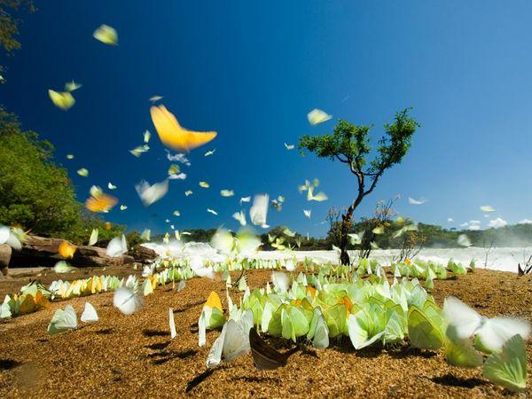brazil-butterflies_13683_600x450